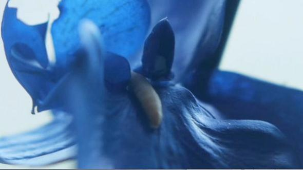 Upstream-Color-bluflower
